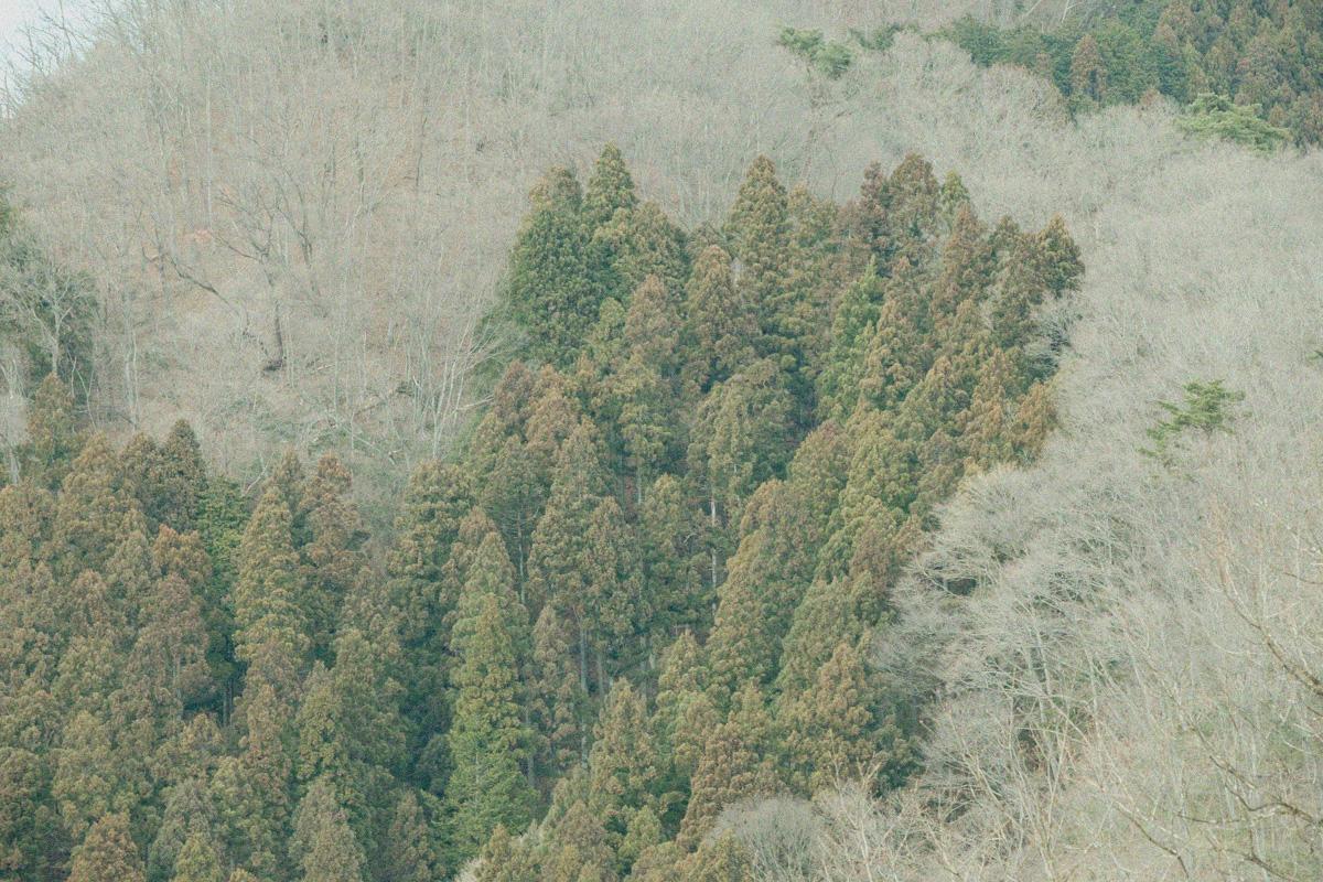 田中林業FSCの森