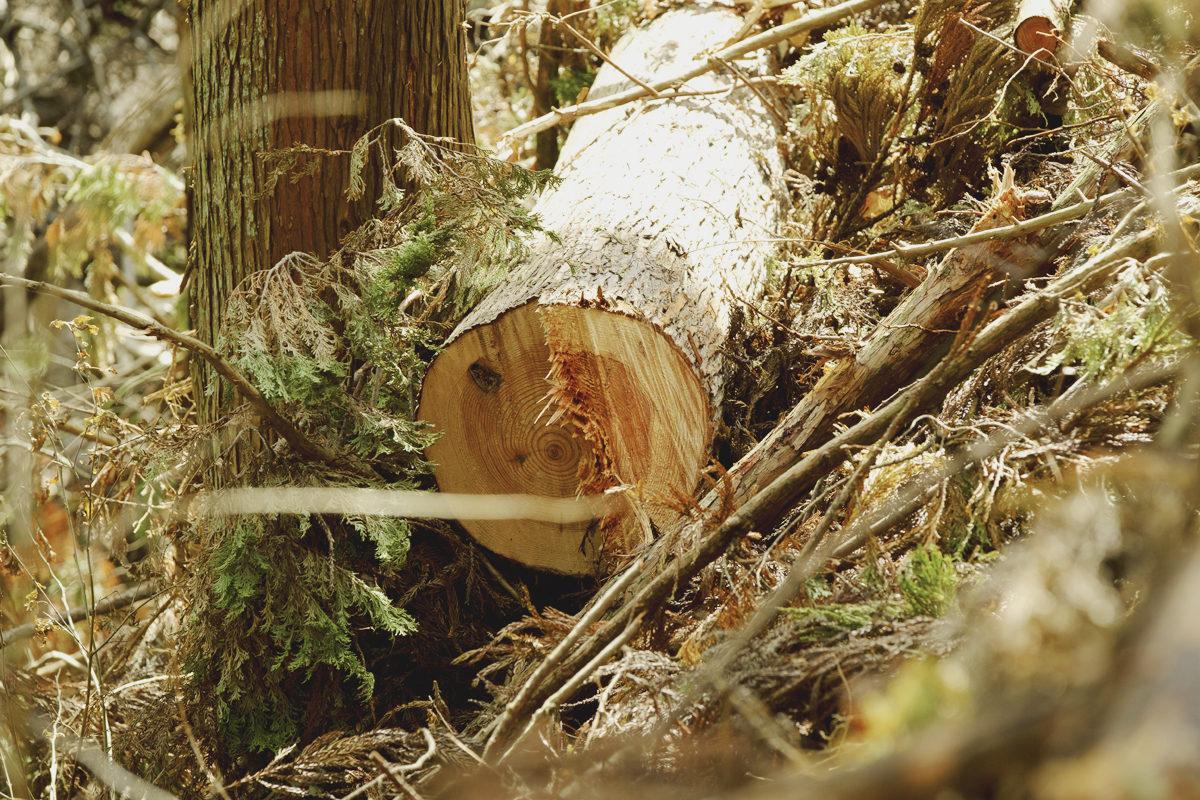 #4 木材合法性に関する歴史